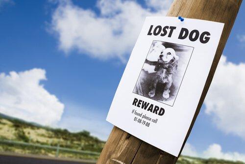 Cartello per la ricerca di un cane smarrito