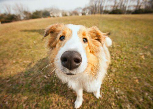 Come trattare il naso secco nel cane