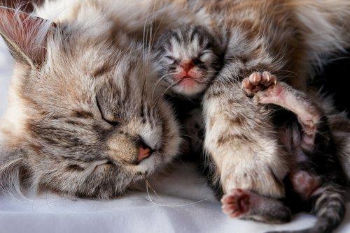Lo svezzamento dei gatti: tutto quello che dovete sapere