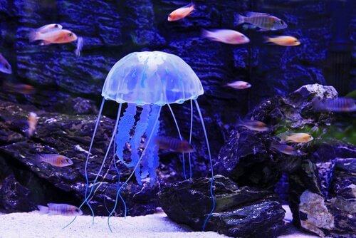 medusa con pesci intorno