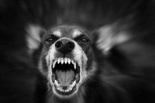 Motivi per i quali un cane può diventare aggressivo
