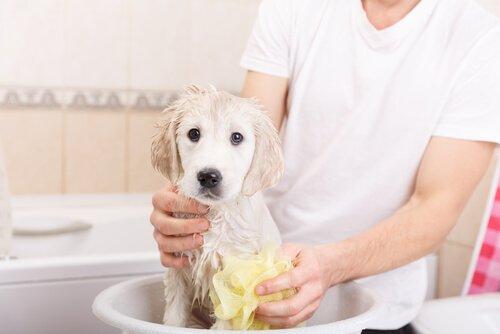 Padrone lava cagnolino bianco in bagno