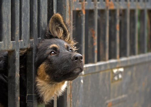 Quali sono i requisiti per adottare un animale?