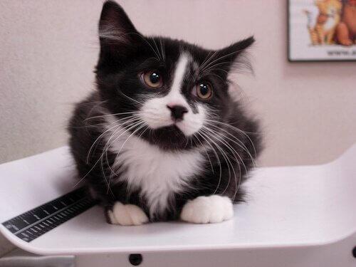 Cosa si fa in una visita veterinaria?