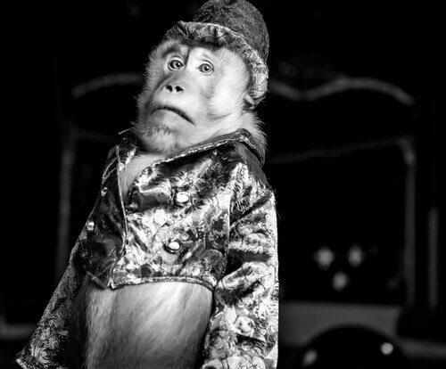 scimmia con vestiti e cappello