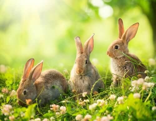 tre conigli pascolano tra fiori e erba