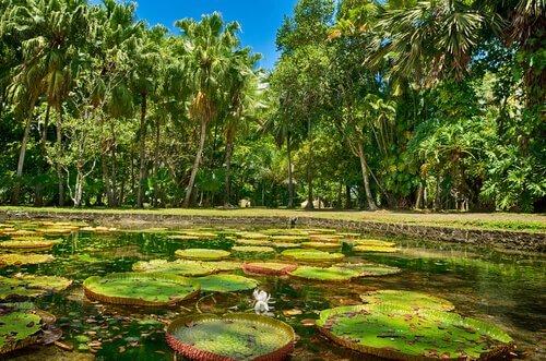 un angolo di foresta amazzonica con delle ninfee