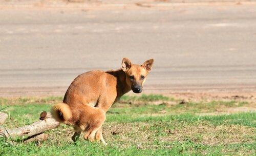 un cagnolino defeca in un giardino
