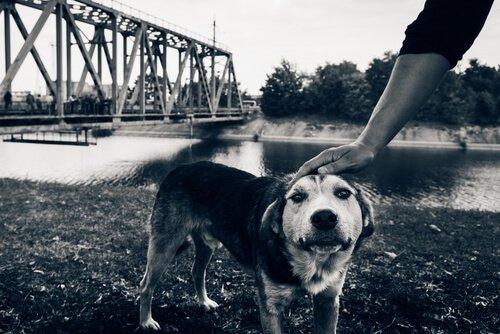 Gli ultimi cani di Chernobyl