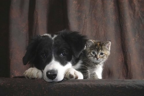 un cane e un gatto insieme sotto una tenda