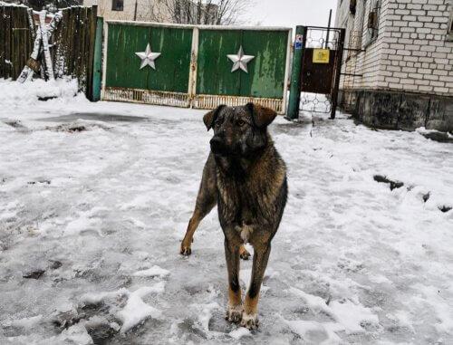 un cane fotografato per le strade di Chernobyl