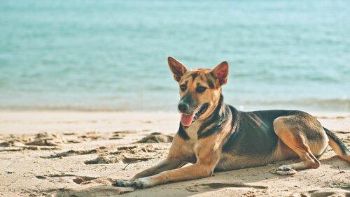 Perché i cani amano sdraiarsi al sole?