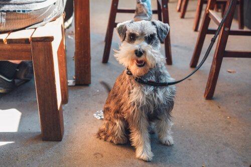 Cane fuori da un ristorante