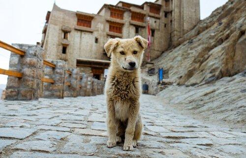 Cane randagio in una strada sterrata