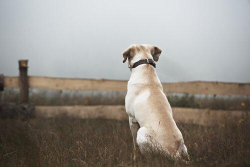 Cane smarrito guarda l'orizzonte