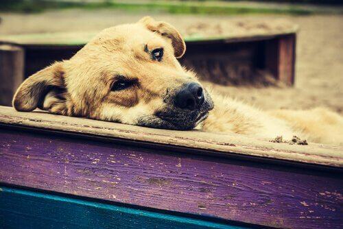 Cane triste con la testa appoggiata su una staccionata di legno