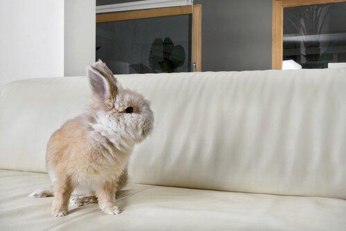 un coniglio bianco seduto su un divano