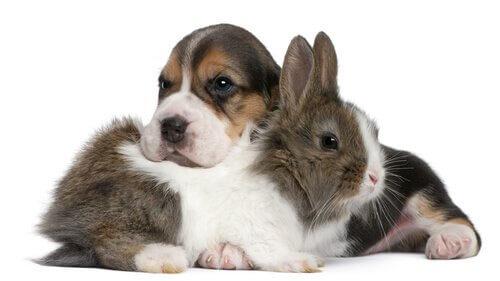 Come favorire la convivenza tra conigli e cani