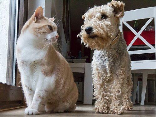 un gatto bianco e un cane grigio seduti uno accanto all'altro