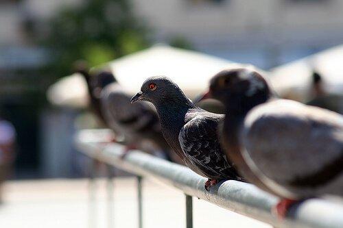 un gruppo di piccioni appoggiati su una balaustra