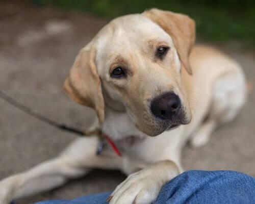 Il cane può aiutarvi con le faccende domestiche?