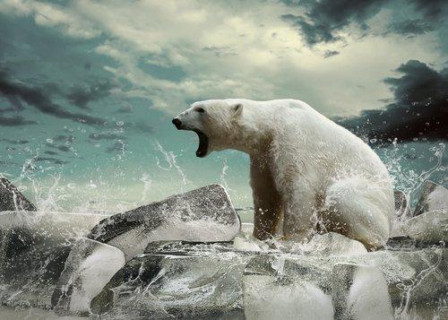 un orso polare con le fauci spalancate a caccia di salmoni