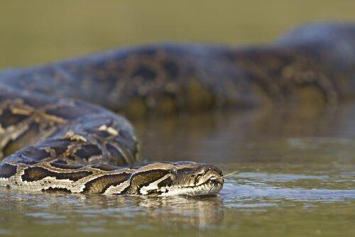 un serpente di foime mentre scivola sull'acqua