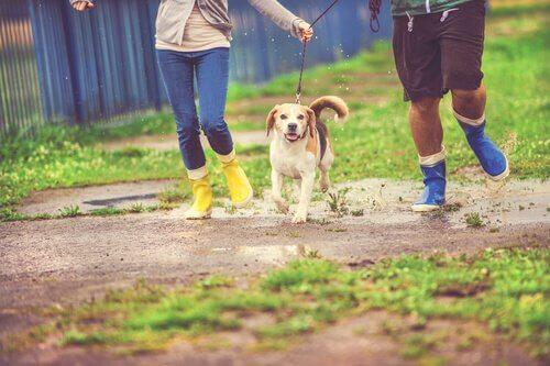 Come portare a spasso il cane quando piove?