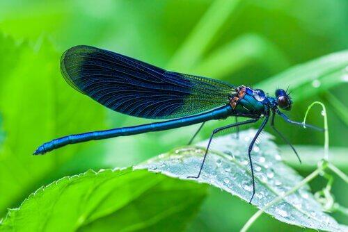 una libellula di profilo appoggiata su una pianta