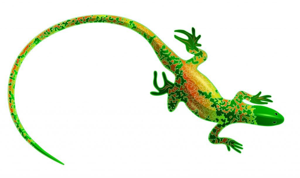 Differenze tra lucertole e salamandre