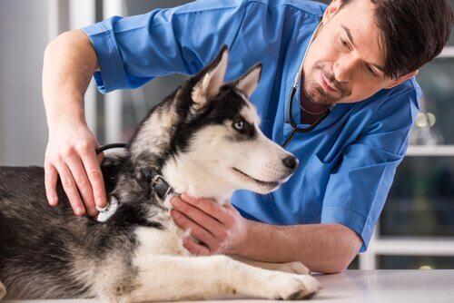 Bisogna castrare il cane? Ecco vantaggi e svantaggi