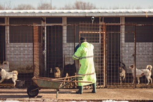 volontario che pulisce gabbie di un rifugio