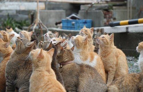 Conosciamo le isole dei gatti in Giappone