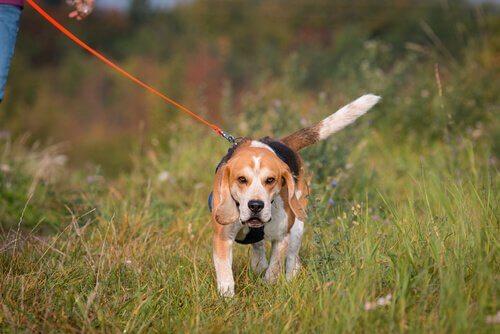 cane che pratica sport mantrailing