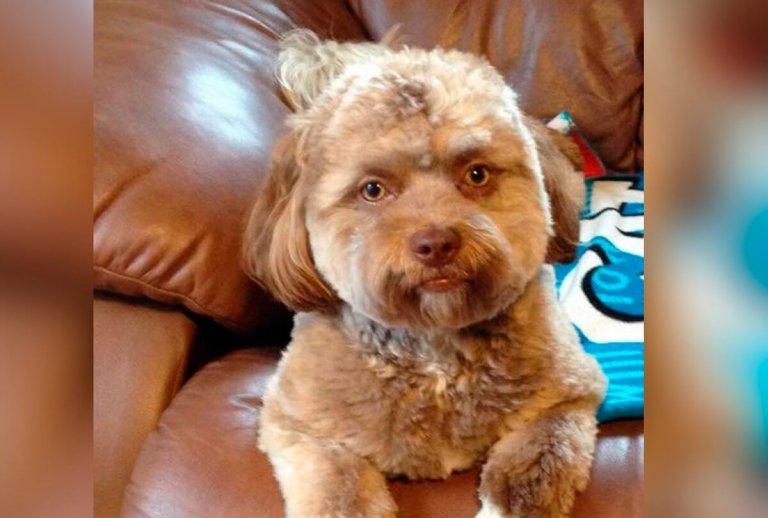 Conosciamo Yogi, il cane con il muso da uomo