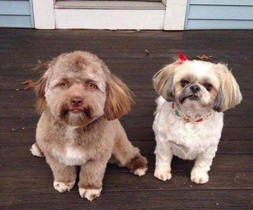 Yogi e un altro cane sulle reti sociali