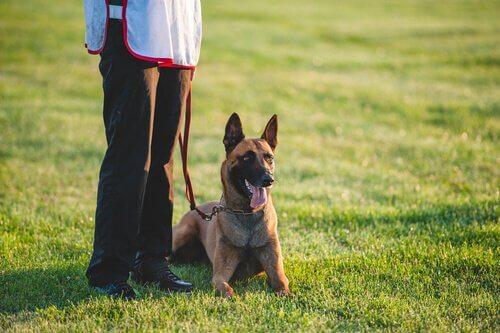 Consigli per interagire con un cane sordo