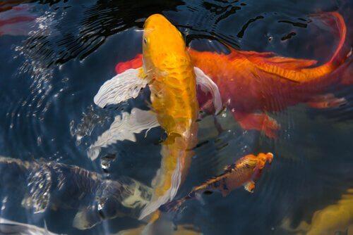 I pesci di fiume in Italia: lo stato della fauna fluviale