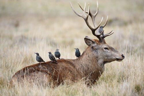 Sapete cos'è la simbiosi animale?