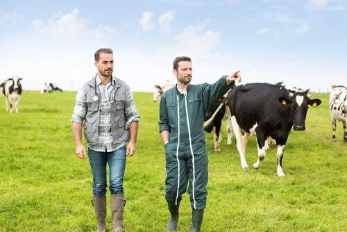 allevatore e veterinario controllano le mucche al pascolo