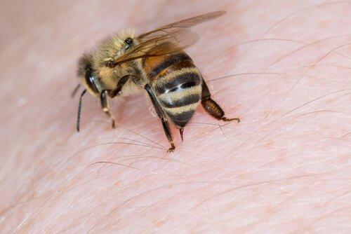 ape che punge