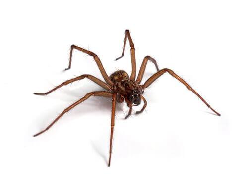 Ragno aracnofobia di Spielberg