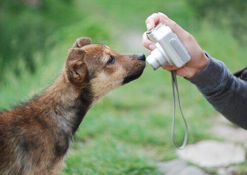 7 consigli per scattare foto al cane in modo perfetto