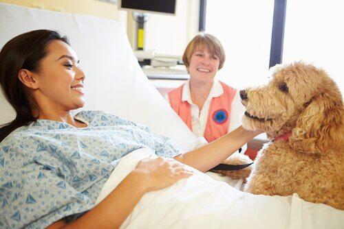 cagnolino in ospedale visita la sua padrona