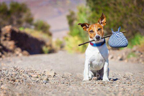 Cagnolino con fagotto