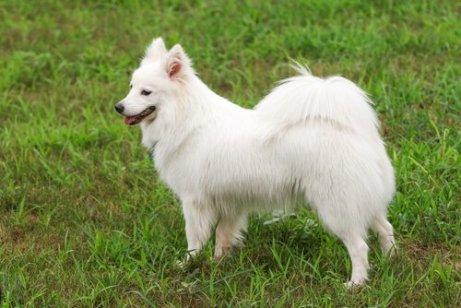 cane bianco nel prato