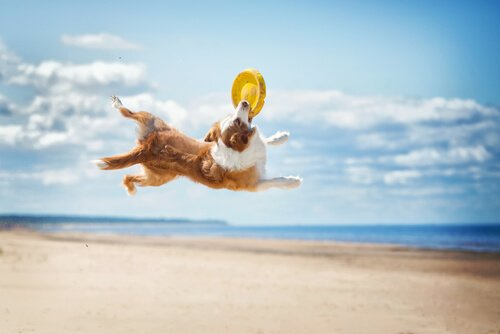 cane che pratica DiscDog in spiaggia