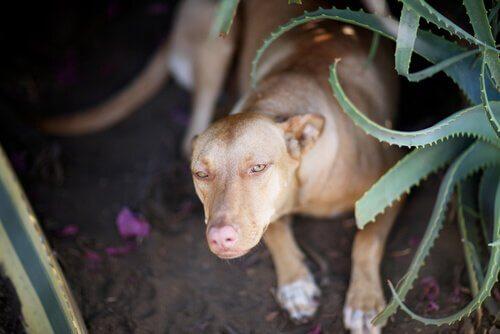 cane vicino a pianta di aloe vera