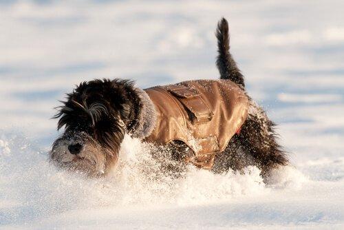cane sulla neve con cappottino