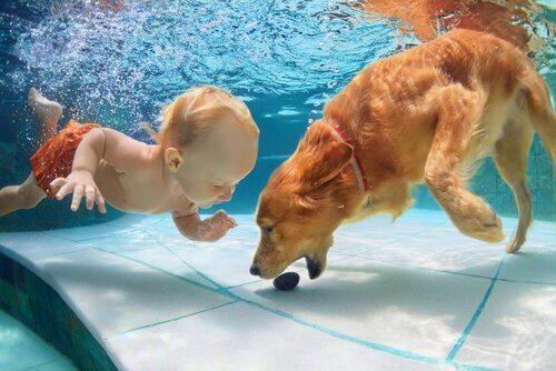 cane nuota sott'acqua e afferra oggetto davanti a bambino